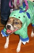 Crazed little dino dog