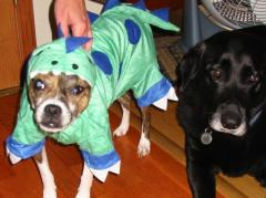 Dino dog and buddy dog